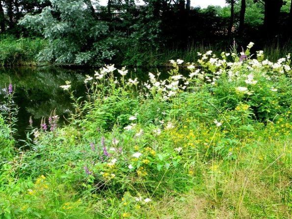 bloemenmengsel kopen, Herbaseeds, bloemenmengsel, inheems, bijenmengsel, vlindermengsel, uitheems, wilde planten zaden, wilde planten zaaien, bloemenzaden, goedkoop, voordelig