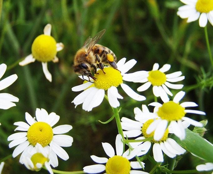 bijenmengsel, bloemenmengsel kopen